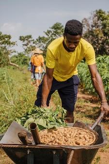 Landarbeiter, der eine schubkarre mit erdnüssen schiebt