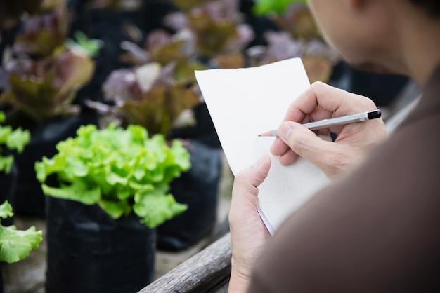 Landarbeiter, der in seinem organischen kopfsalatgarten arbeitet