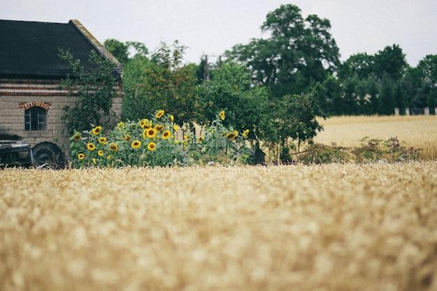 Landhaus mit trockenem stroh