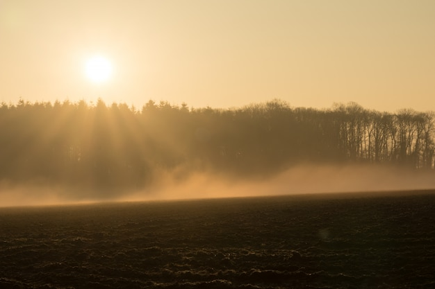 Landlandschaft morgens im nebel