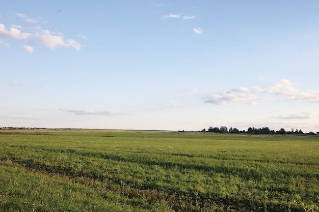 Landschaft außerhalb der stadt. wiese und blauer himmel. sonnenuntergang über dem dorffeld