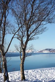 Landschaft - bäume am ufer des fjords