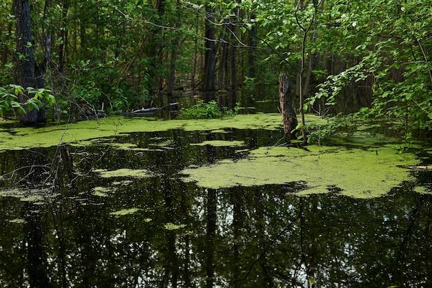 Landschaft - bewaldeter altarm mit wasserlinsen überflutet während der frühjahrsflut