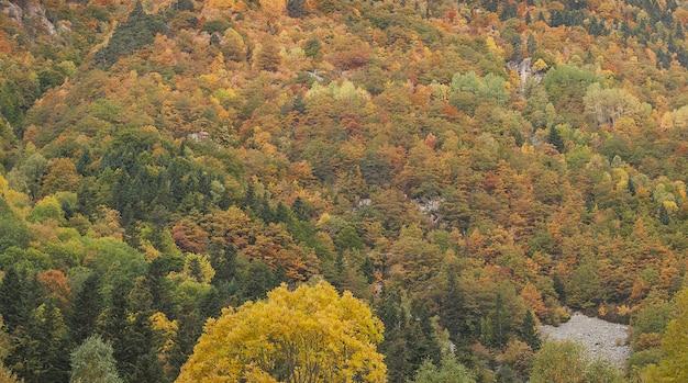 Landschaft der bäume bedeckt in den bunten blättern im herbst in spanien