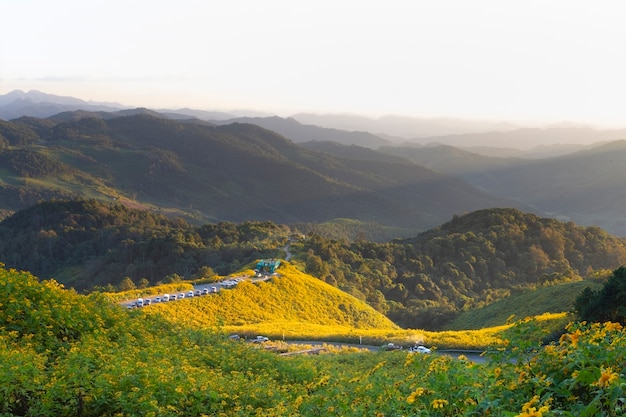 Landschaft der baum-ringelblume, große ansicht während der blühenden jahreszeit an