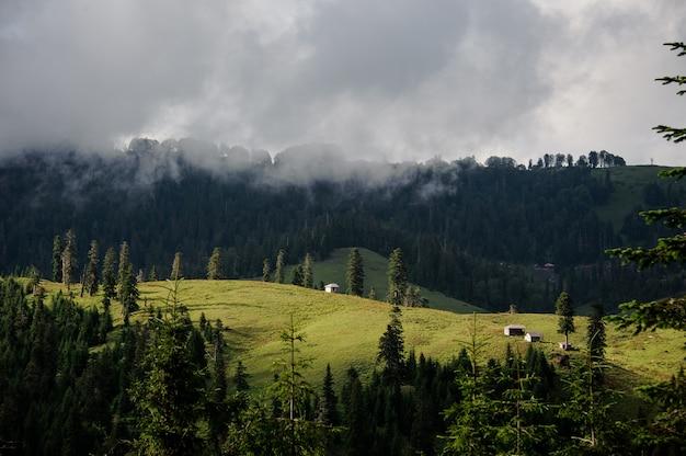 Landschaft der berge bedeckt mit wald im weißen nebel im vordergrund des grünen feldes