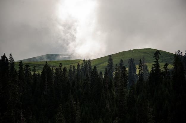 Landschaft der berge bedeckt mit weißem nebel im vordergrund des immergrünen baumwaldes