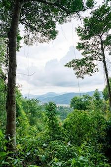 Landschaft der berge im tropischen regenwald reichliche natur in asien thailand