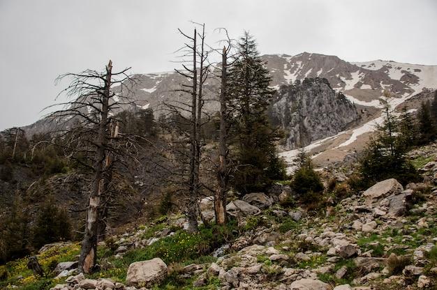 Landschaft der berge von schnee mit kahlen bäumen bedeckt