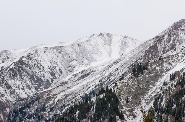 Landschaft der felsigen berge des winters mit nebel