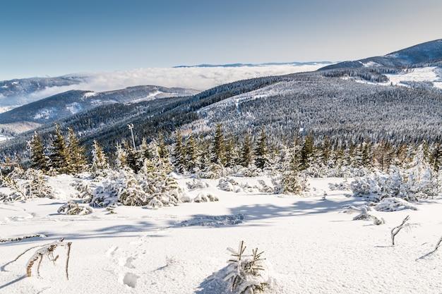 Landschaft der hügel, die tagsüber im schnee und in den wäldern unter dem sonnenlicht bedeckt sind