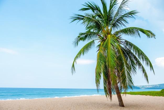 Landschaft der kokosnusspalme, schönes blaues seetropisches strand.