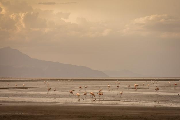 Landschaft der savanne tansanias mit heiligem berg lengai