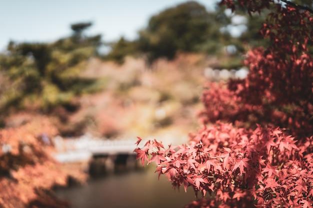 Landschaft des gartens in der herbstsaison in einem allgemeinen park von nara, japan