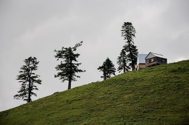 Landschaft des holzhauses, das auf dem hügel mit immergrünen bäumen steht