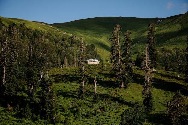 Landschaft des holzhauses mitten in dem feld unter den bäumen