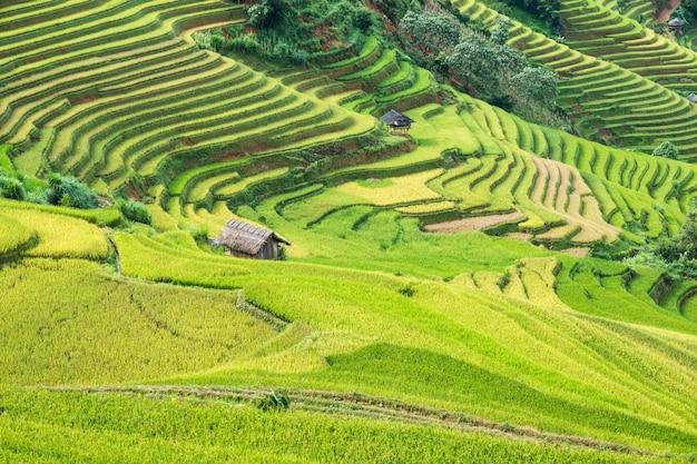 Landschaft des reisfeldes auf terassenförmig angelegtem mit stammhäuschenmarkstein von mu cang chai