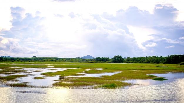 Landschaft des sumpfes, mit der natur, die entspanntem und hellem blauem himmel mit wolke im hintergrund sich fühlt.