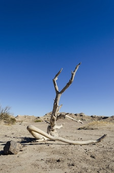 Landschaft des tals des mondes, san juan, argentinien