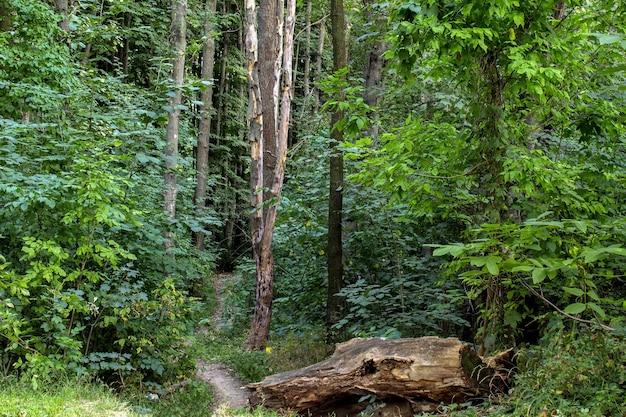 Landschaft des waldes mit grünen bäumen
