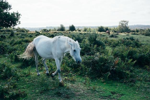 Landschaft des weißen pferdes, das auf der weide weidet