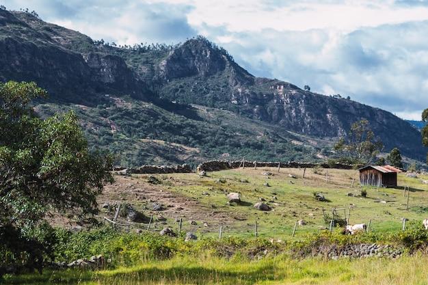 Landschaft eines berges