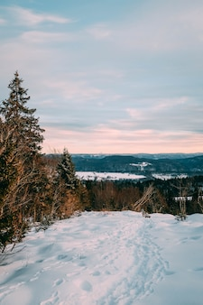 Landschaft eines waldes bedeckt im schnee unter einem bewölkten himmel während des sonnenuntergangs