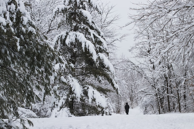 Landschaft eines waldes, umgeben von bäumen und gras, bedeckt mit schnee und nebel