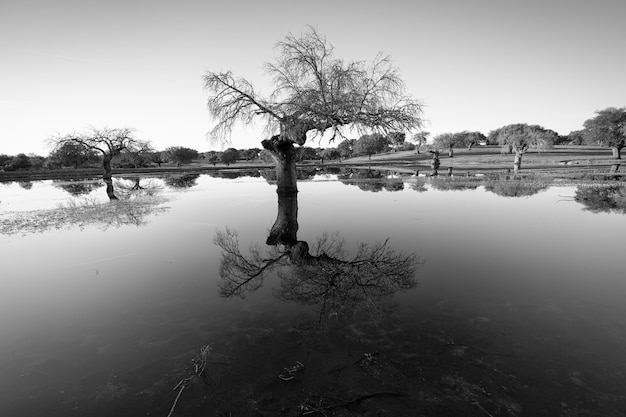 Landschaft in der nähe von arroyo de la luz. extremadura. spanien.