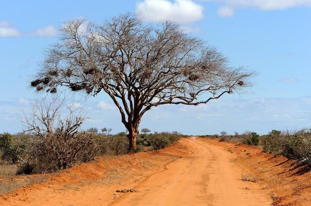 Landschaft mit baum in afrika