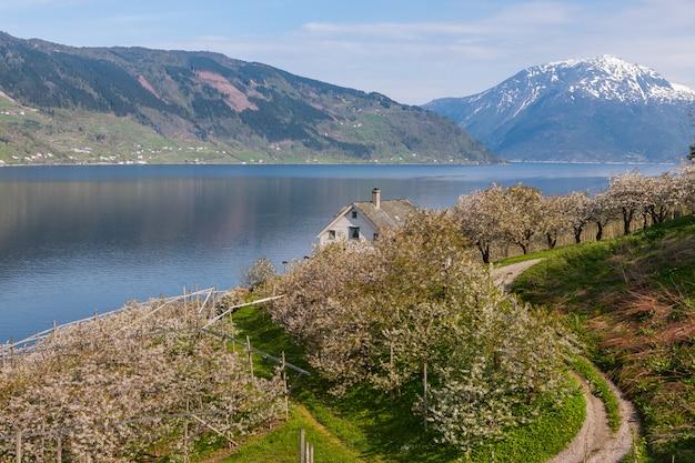 Landschaft mit bergen. dorf in norwegischen fjorden
