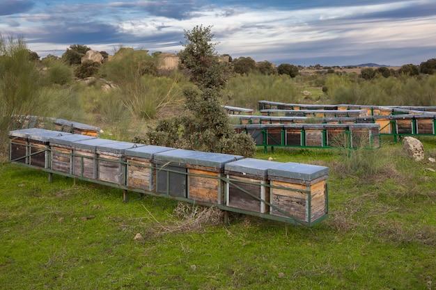 Landschaft mit bienenstöcken in den barruecos. extremadura. spanien.