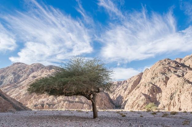 Landschaft mit canyon in der wüste