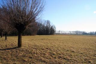 Landschaft mit einem einzigen baum im vordergrund