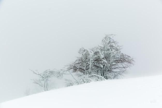 Landschaft mit einem schneebedeckten und eisigen baum im winter auf einem berghang bei nebligem wetter.
