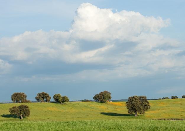 Landschaft mit einigen bäumen und einem schönen himmel