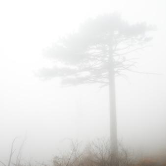 Landschaft mit großer kiefer im nebel
