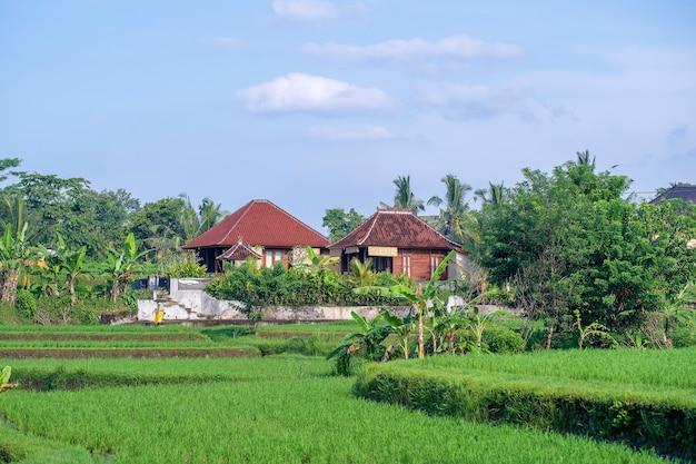 Landschaft mit grünen reisfeldern, haus und palmen am sonnigen tag auf der insel bali, indonesien. natur- und reisekonzept