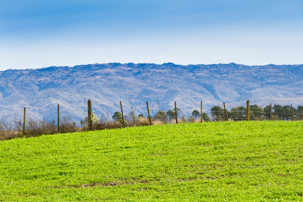 Landschaft mit kleeernte für futter und berge