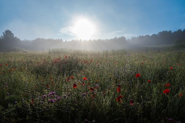 Landschaft mit nebel bei sonnenaufgang