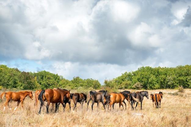 Landschaft mit pferdeherde auf der wiese