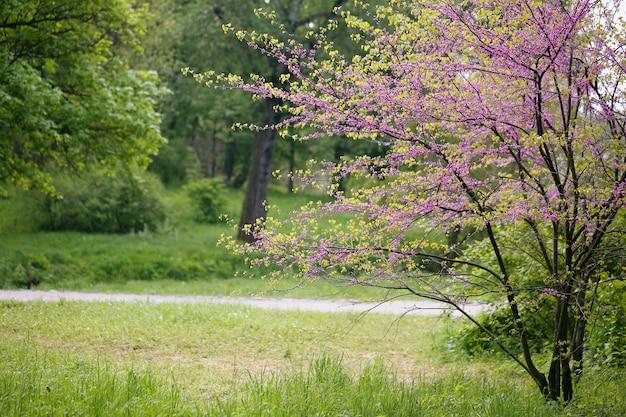 Landschaft mit redbud tree