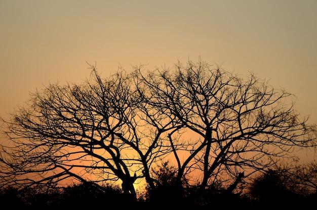 Landschaft mit schattenbild der bäume bei sonnenuntergang. hintergrundbeleuchtung landschaft,