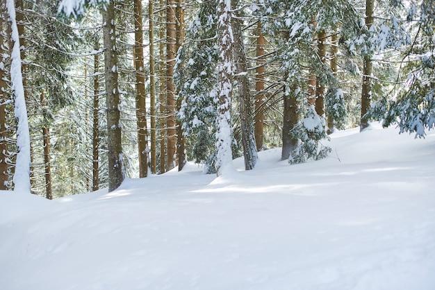 Landschaft mit schnee und pflanzen der winterumgebung