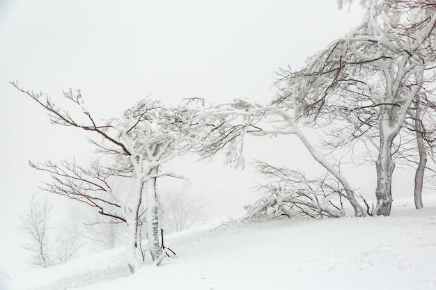 Landschaft mit schneebedeckten und eisigen bäumen im winter auf einem berghang bei nebligem wetter.