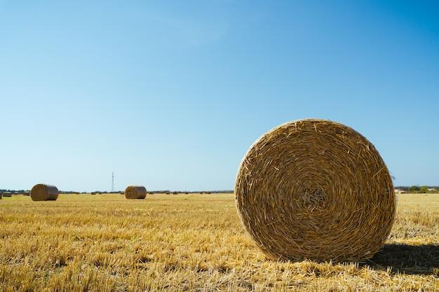 Landschaft mit strohballen auf landwirtschaftlichem feld.