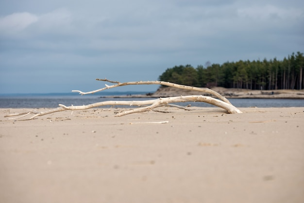 Landschaft mit totem baum im strandsand