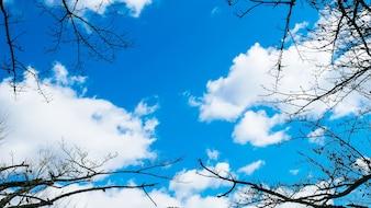 Landschaft mit trockenen Niederlassungen mit blauem Himmel im Herbst ist der Hintergrund.