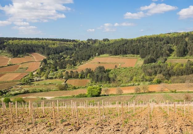 Landschaft mit weinbergen und wäldern auf den hügeln in burgund, frankreich