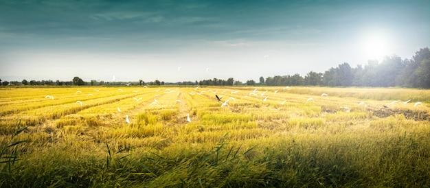 Landschaft mit wildem vogel